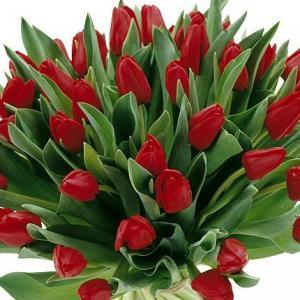 Tulpen geel/rood gevlamd