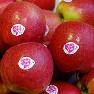 Appel Pink-lady