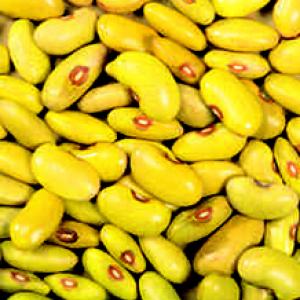 Friese Woudbonen