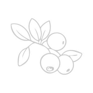Fruitdoos